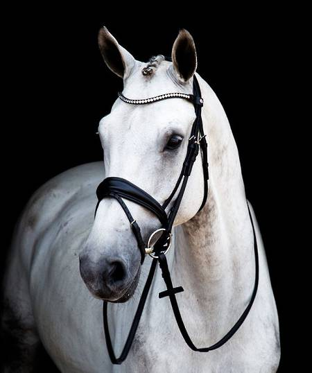 Stubben 2810 Magic Tack Switch Bridle