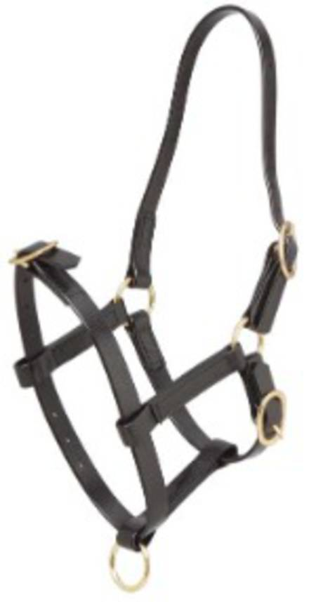 Zilco Foal Halter-Synthetic