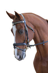 Collegiate Performance Hanoverian II Bridle