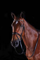 Collegiate Multi Crystal Crank Flash Bridle