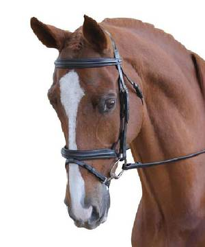 Collegiate Padded Hanoverian II Bridle