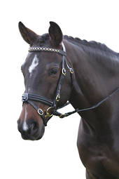 Kincade Performance Hanovarian II Bridle
