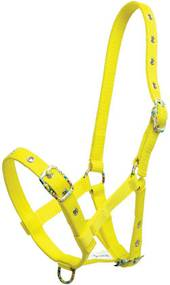 Zilco Foal Halter with Coloured Buckles