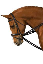 Lunging Amp Training Horsewear Forbes Amp Co